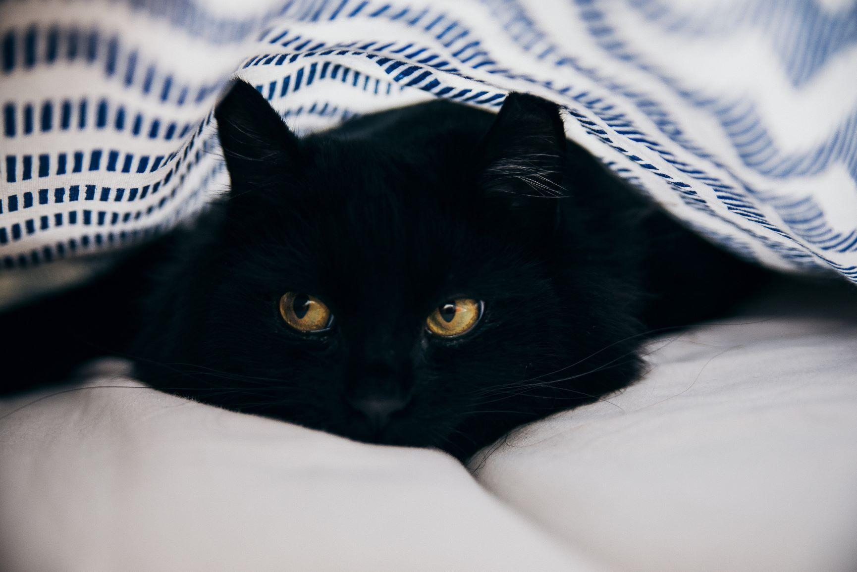 Crne žene crna maca